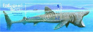 Stamp of basking shark